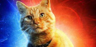goose captain marvel gatto