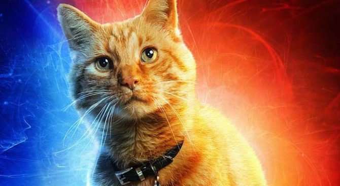 goose gatto capitan marvel